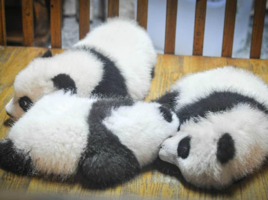 nine2five podcast die hoehle der pandas
